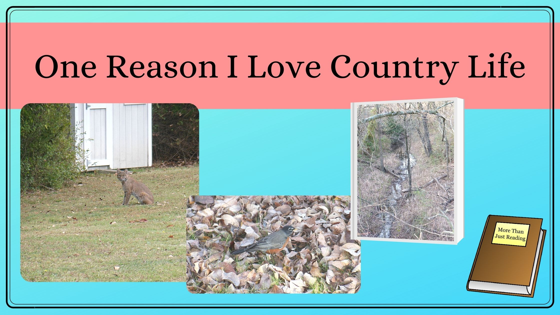 One reason I love country life