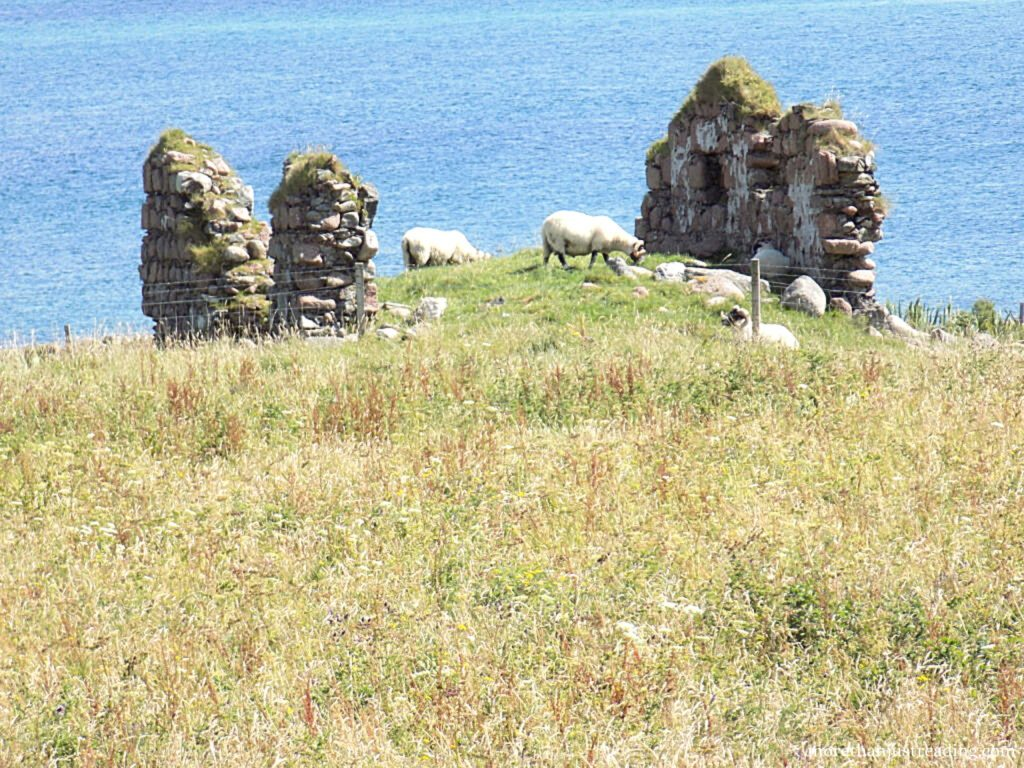 Sheep next to old ruins and the ocean