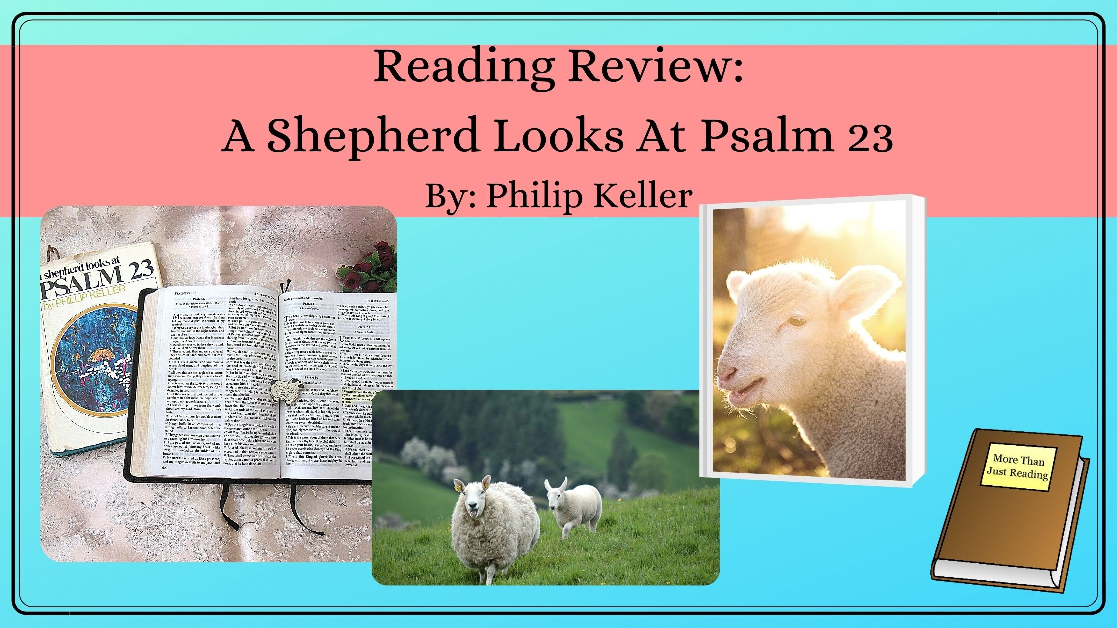 Title of blogpost and pictures of sheep