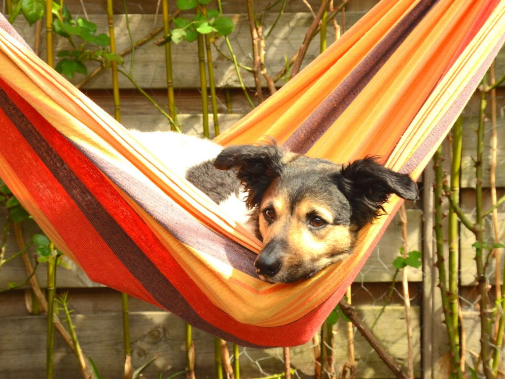 dog laying in hammock, how to not waste your summer